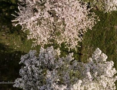 Plant, Flower, Blossom
