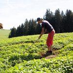 Outdoors, Gardening, Human