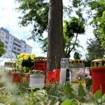 Plant, Potted Plant, Jar