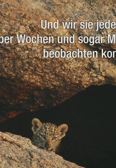 Großkatzen hautnah