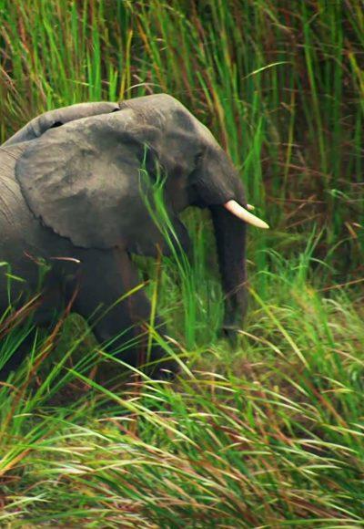 Elefanten auf der Spur