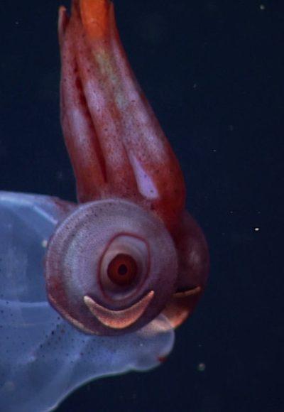 Kreaturen der Tiefsee