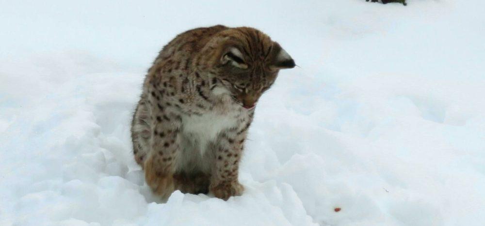 Die Tiere der Hohen Tatra