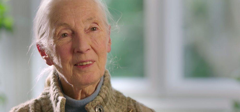 Jane Goodall im Interview