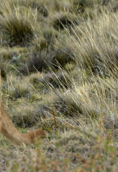 Ein Paradies für Pumas