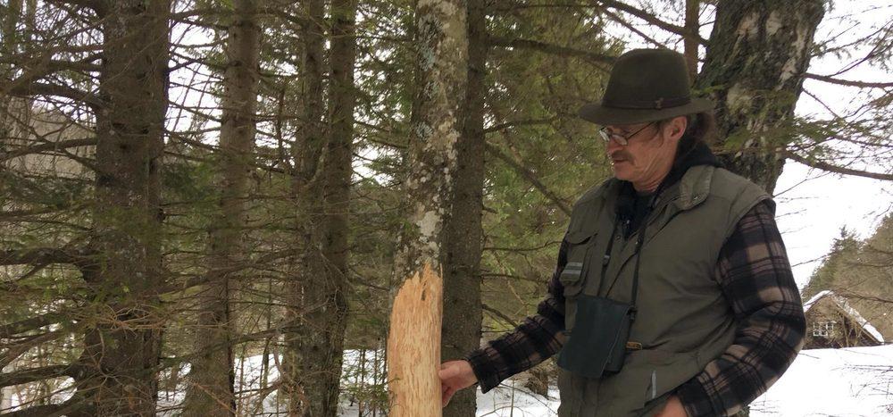Unser Wald: Wer ist sein Feind?