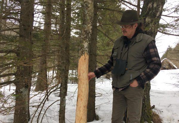 Wald: Wer ist sein Feind?