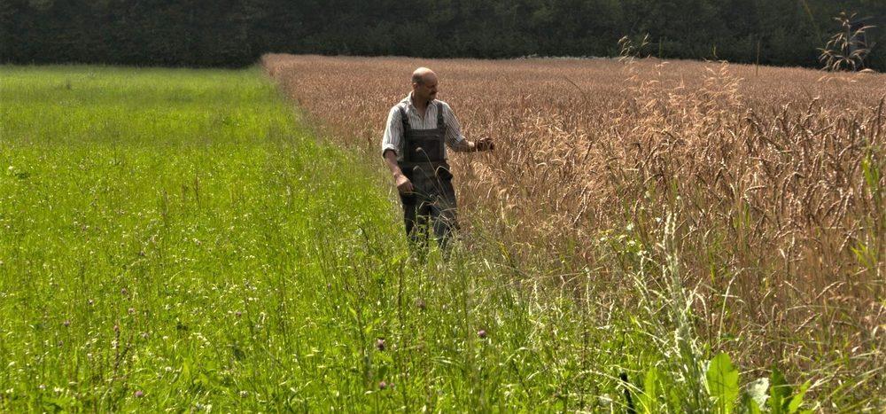 """""""Hoadnmehl"""": Ein alter Schatz der Landwirtschaft"""