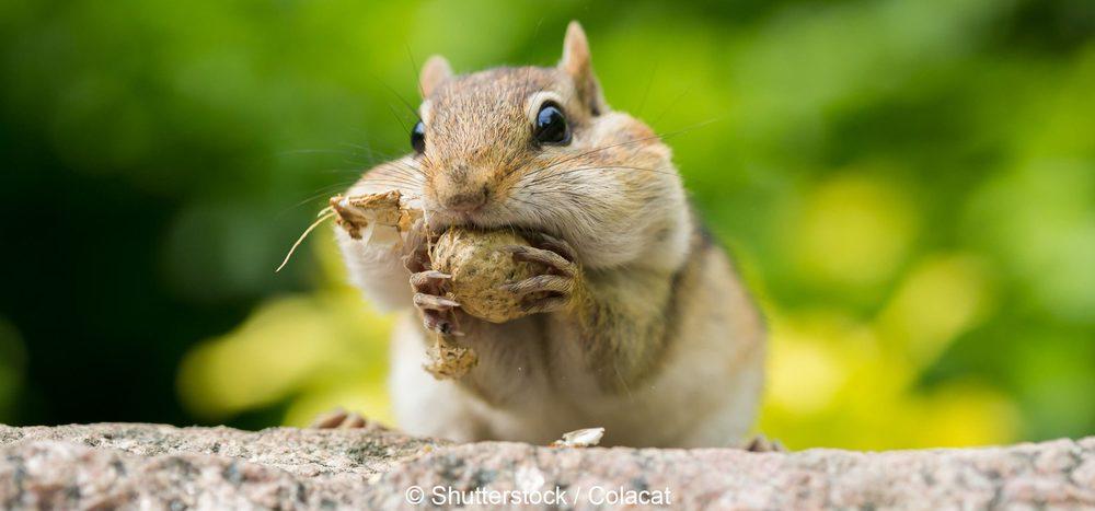 """Schlau, flink und flauschig: Die """"Superhörnchen"""""""