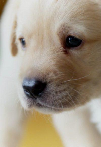 Wie lernen Blindenhunde?