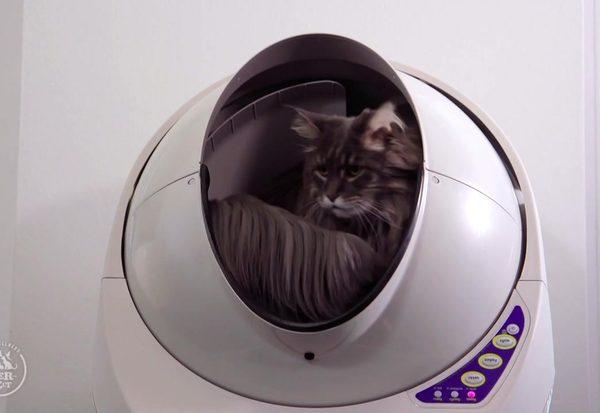 Das Luxus-Katzenklo