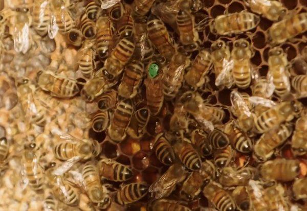 Bei den Bienen im Zillertal