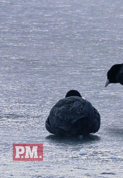Bekommen Vögel kalte Füße?