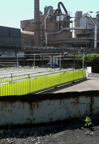 Helfen Algen gegen CO2?