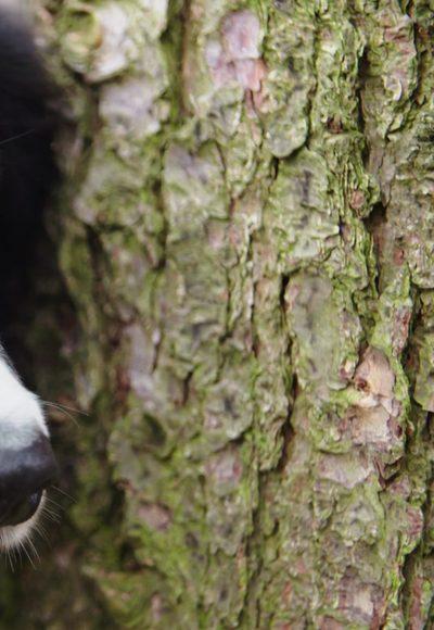 Riechen Hunde Borkenkäfer?