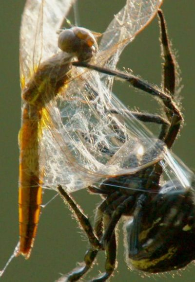 Das größte Spinnennetz