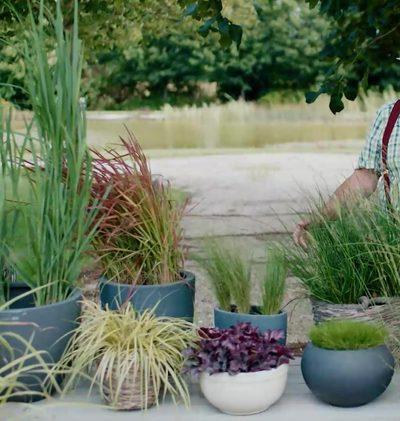 Tipp: Gräser pflanzen