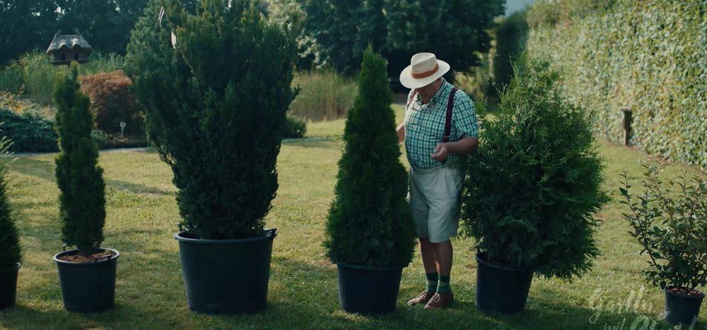 Tipp: Heckenpflanzen