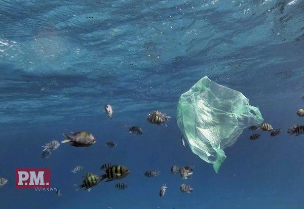 Meer ohne Plastik?